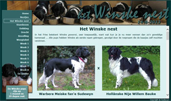 Friese Stabij pups, Winske nest